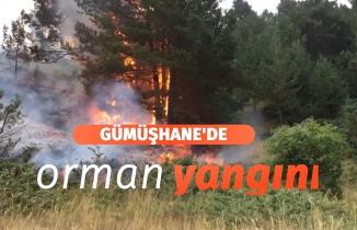 Gümüşhane'de orman ve örtü yangını