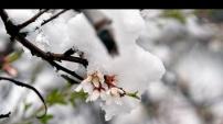 Gümüşhane'ye 20 Mart'ta kar yağdı