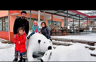 Kardan adam değil, kardan kutup ayısı